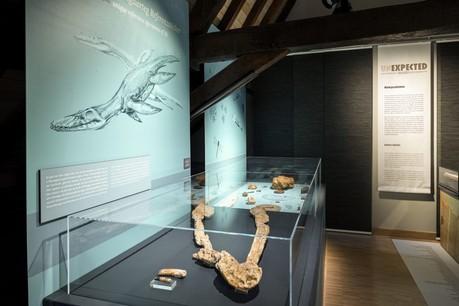 Le fossile avait été exposé pour la première fois au MNHN lors de l'exposition «Unexpected treasures» en 2018. (Photo:Musée national d'histoire naturelle)