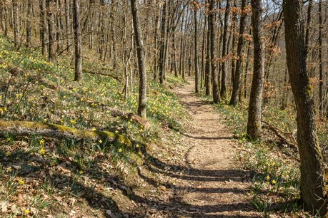 Le bois luxembourgeois,même non certifié, respecte les grands principes de protection des forêts du FSC. (Photo: Shutterstock)