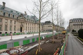 Face au bâtiment de la Spuerkeess, la plantation des nouveaux arbres en vue de l'arrivée du tram témoigne d'un travail suspendu. ((Photo: Matic Zorman))