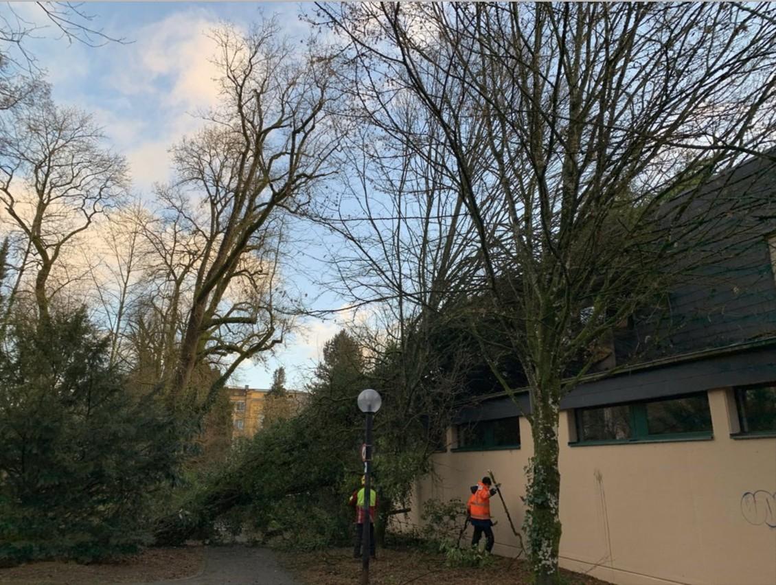 La plus grande prudence est recommandée sur les routes en raison des chutes de branches et d'arbres rendues possibles par les vents violents de la nuit. (Photo: CGDIS/Twitter)