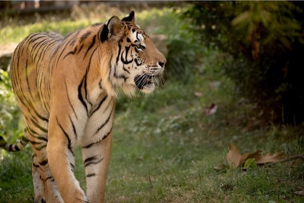 MichelLouis a créé le zoo d'Amnéville en 1986 avec Jean-MarcVichard. La collection compte 2.000animaux de 360espèces différentes. (Photo: Shuterstock)